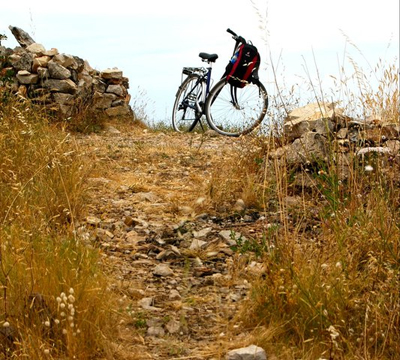 bike-paddy